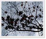 三峽秘密賞楓景點